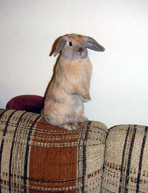bunny-beg.jpg