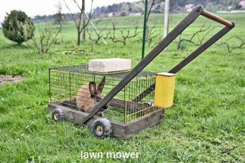 Bunny Lawn Mower